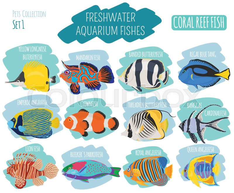 Freshwater Aquarium Fish Breeds Icon Stock Vector Colourbox