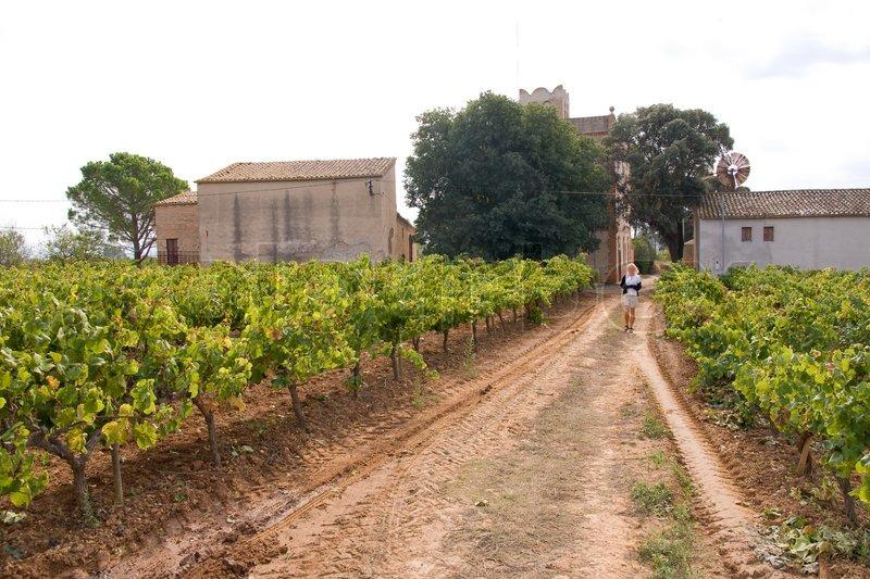 Beautiful vineyard scenery in catalan spain stock photo colourbox
