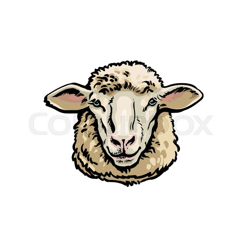 Realistic Hand Drawing Of Ewe Head Sheep Breeding Concept Milk Meat And Wool Production Symbol Vector