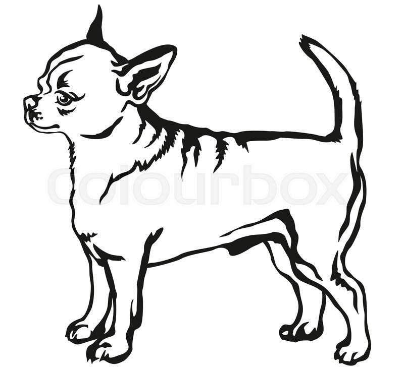 Long Haired Chihuahua Clipart