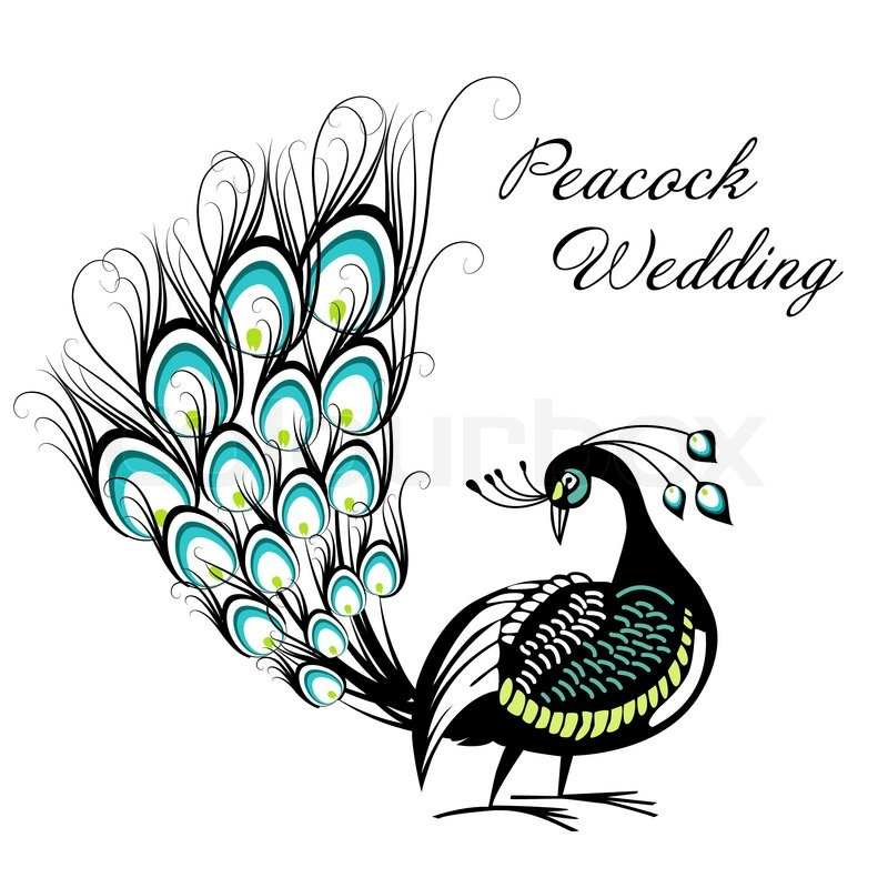 peacock card stock vector colourbox