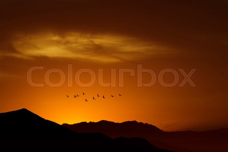 Birds over bright sunny yellow sky background with copy space, stock photo