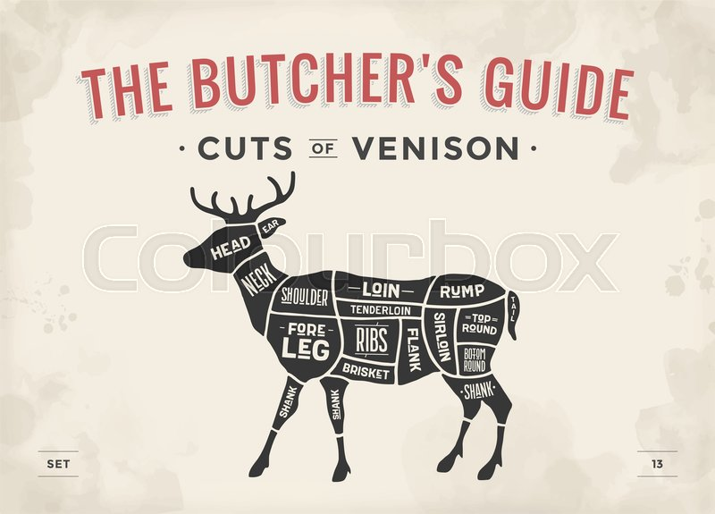 cut of meat set poster butcher diagram scheme venison vintage rh colourbox com deer butcher parts deer butcher parts