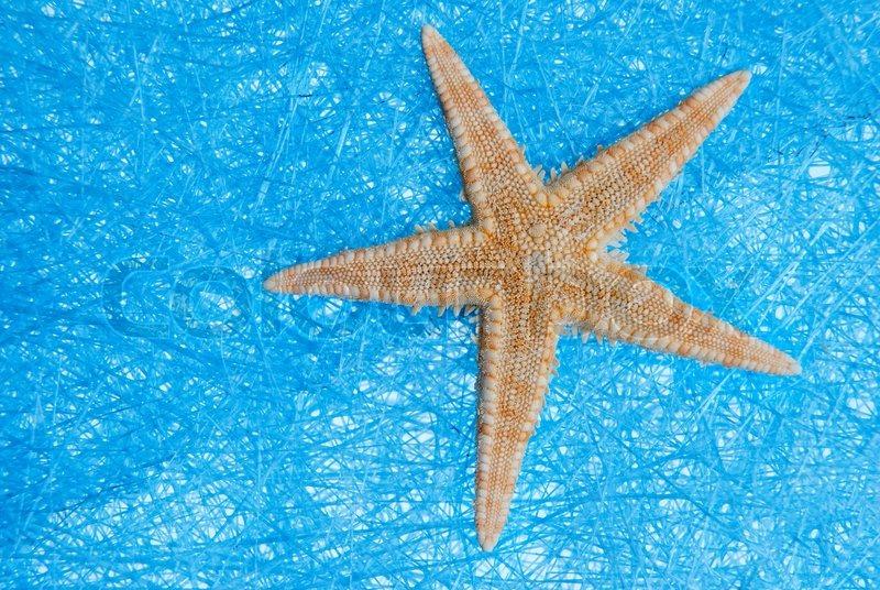 sea star on blue straw meshbackground stock photo colourbox