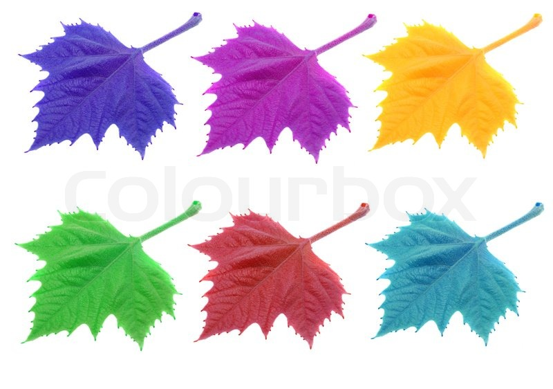 colorful leaves isolated on white background stock photo fall leaf clipart black and white fall leaf clipart with transparent background