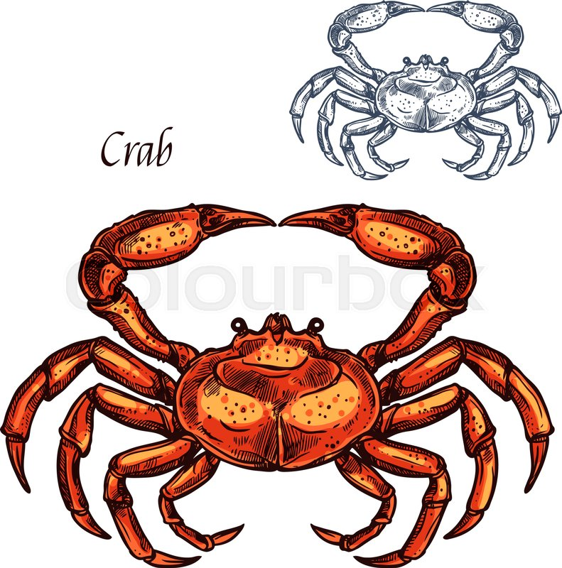 Crab Animal Isolated Sketch Ocean Crustacean Sea Crab Or Lobster
