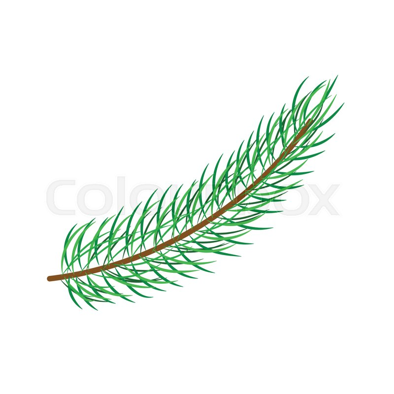 Vector Flat Cartoon Style Spruce Pine Fir Tree Leaves Needles On