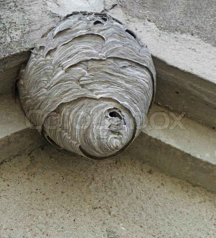 hornissen nest unter einem dach berstand stockfoto. Black Bedroom Furniture Sets. Home Design Ideas