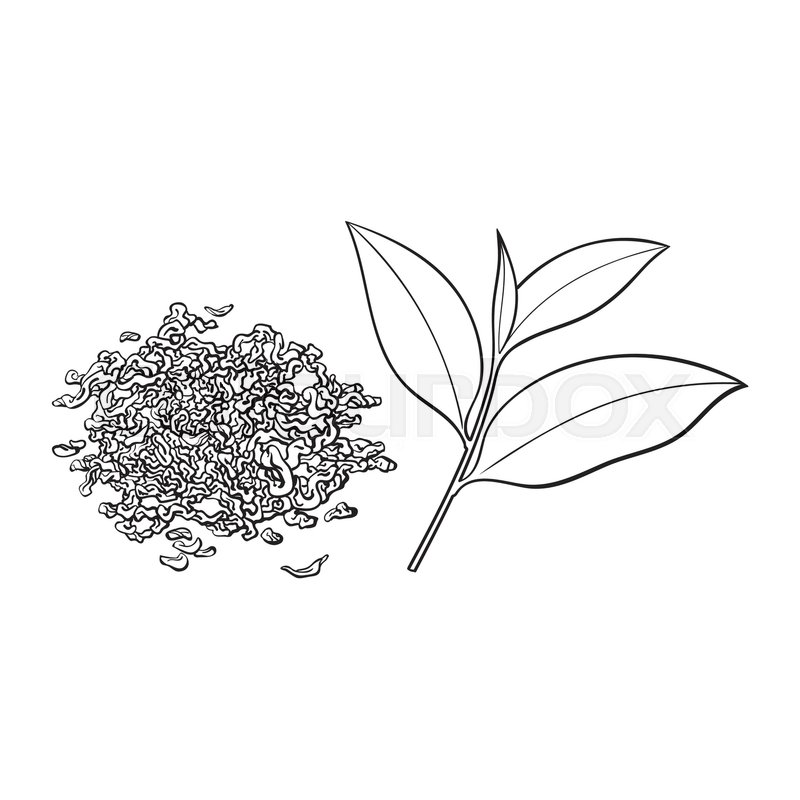 Hand Drawn Pile Heap Handful Of Dry Tea And Fresh Young Leaf Sketch Vector Illustration Isolated On White Background Realistic Drawing