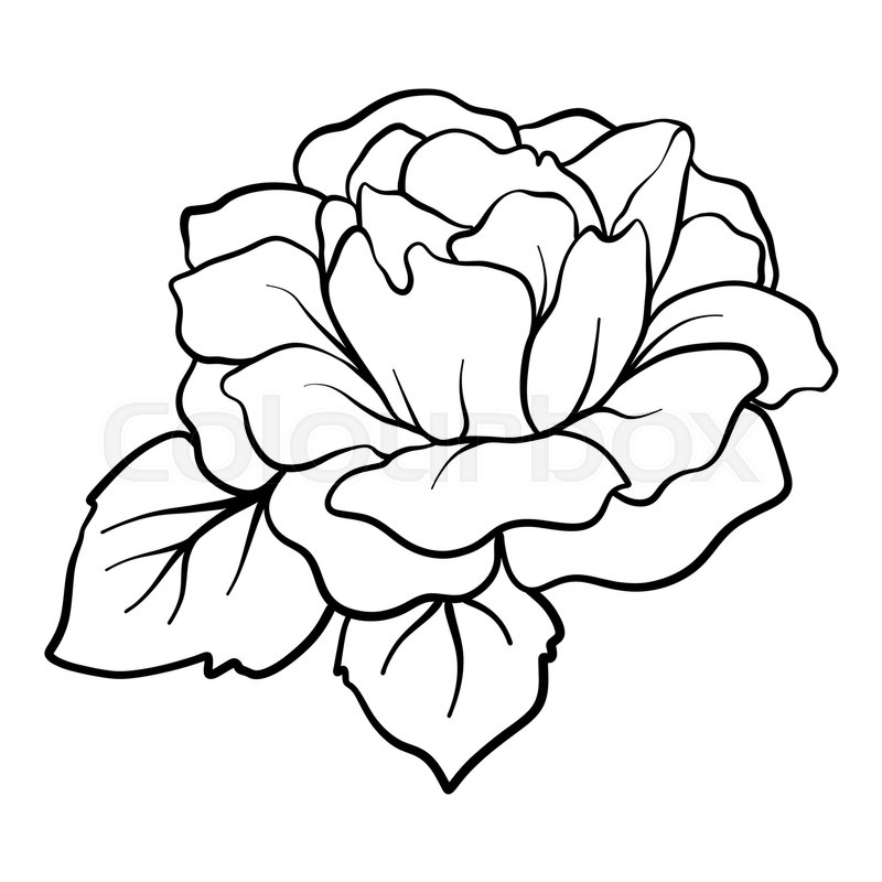 Isolated rose. Outline drawing. Stock ... | Stock vector | Colourbox