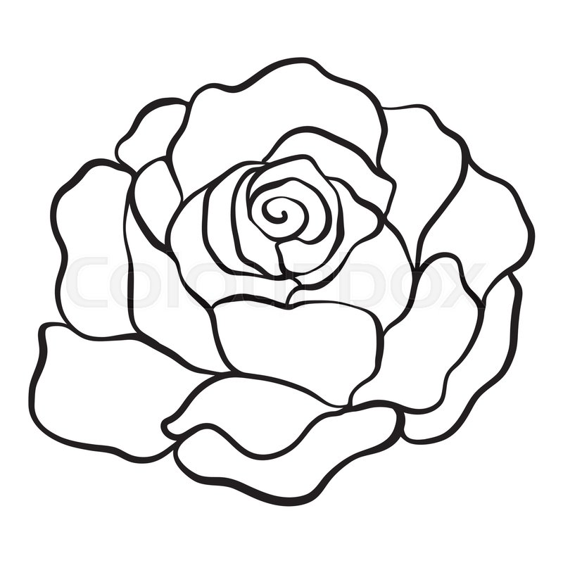 Isolated rose outline drawing stock line vector illustration vector