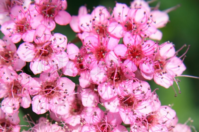 Pink flower background from the small flowers stock photo colourbox mightylinksfo