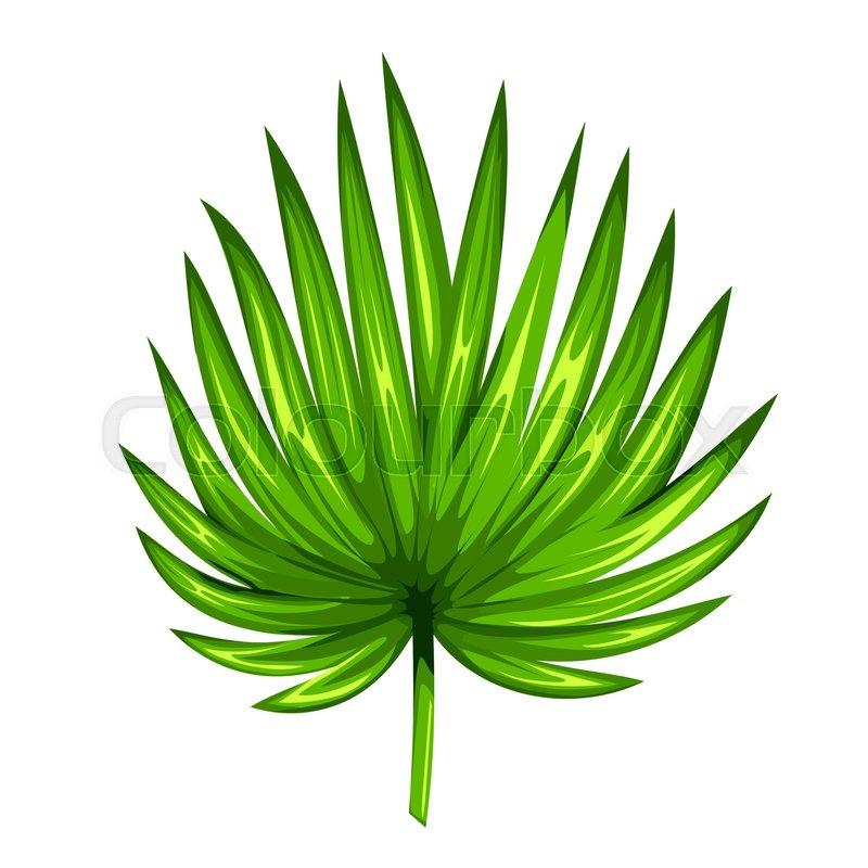 Palme, lecker, botanik | Vektorgrafik | Colourbox