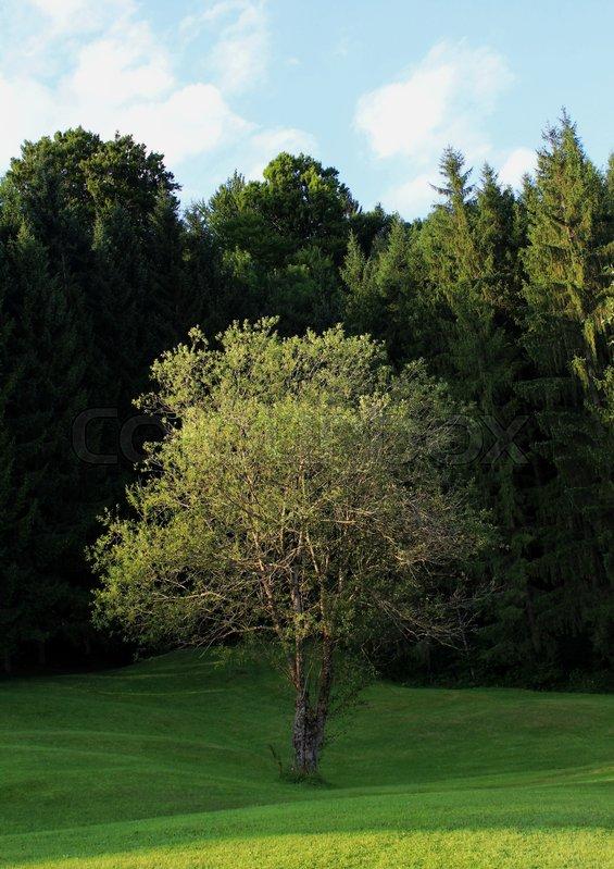 Baum einsamkeit pflanzen stock photo colourbox for Baum pflanzen