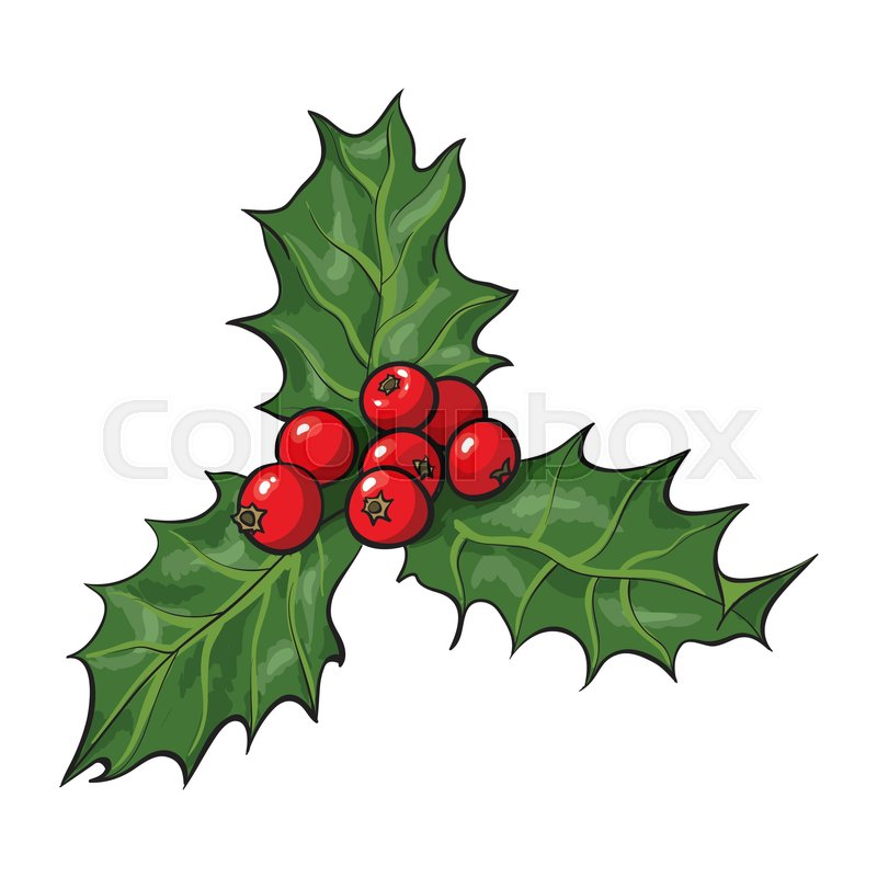 mistletoe branch with leaves and berries holly berry christmas decoration element sketch vector illustration on white background