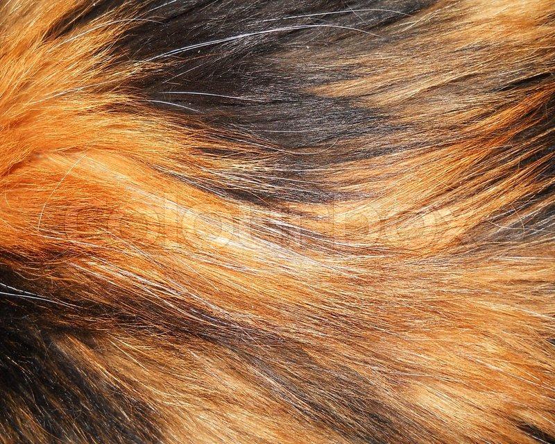 Cat hair, stock photo