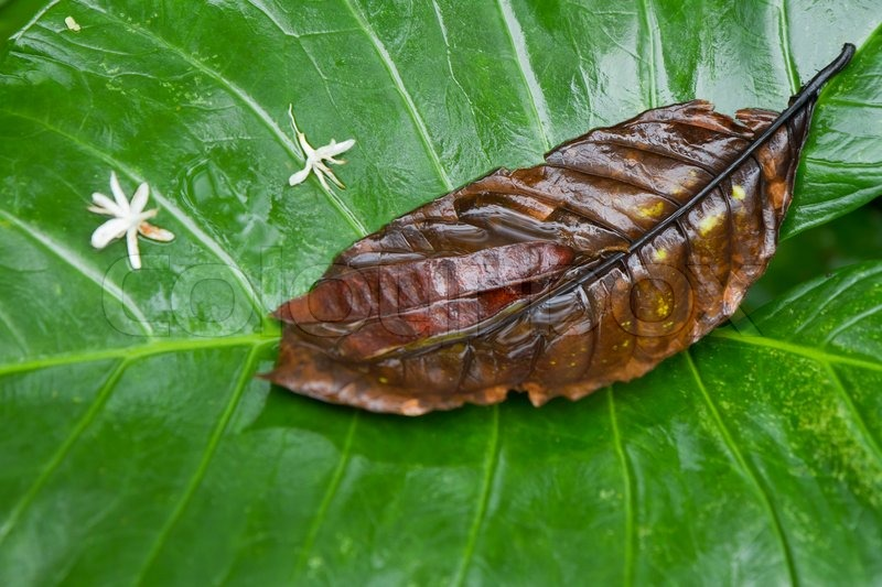 Stock image of 'Yam plant in tropical rain forest'