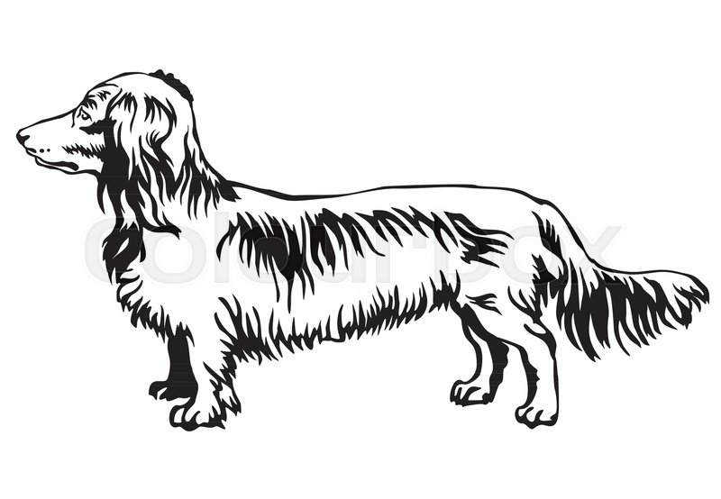 Contour Line Drawing Dog : Decorative contour portrait of standing in profile long