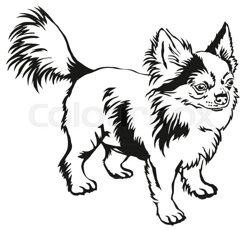 Contour Line Drawing Of A Dog : Decorative contour portrait of standing in profile long
