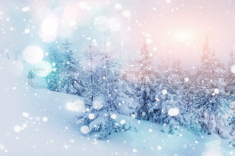 Mysterious winter landscape majestic mountains in winter. Magical winter snow covered tree. Photo greeting card. Bokeh light effect, soft filter. Carpathian. Ukraine. Europe, stock photo