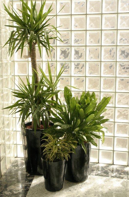 Indoor Topfpflanzen Von Einem Glasbausteinwand Stock Foto