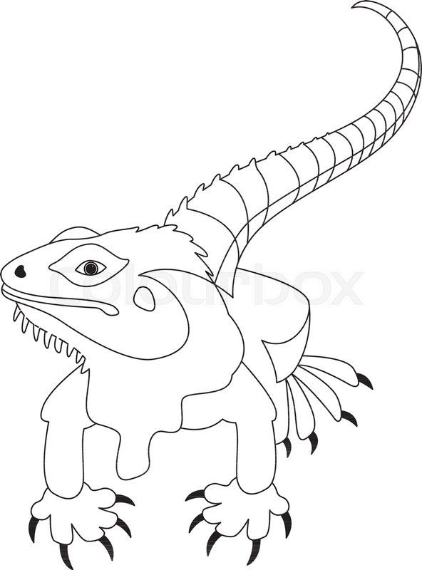 lizard vector illustration line drawing front side stock vector colourbox