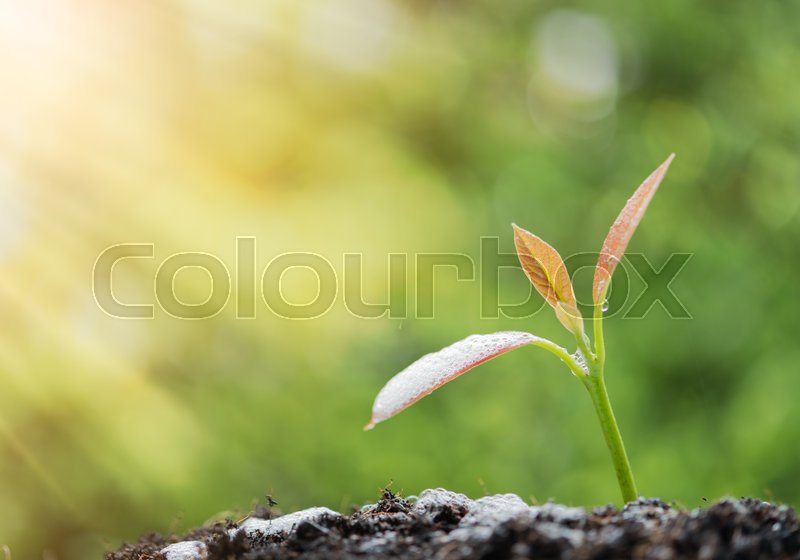 Success in business,watering young new born plant growing out of soil in sun light ,agriculture, stock photo
