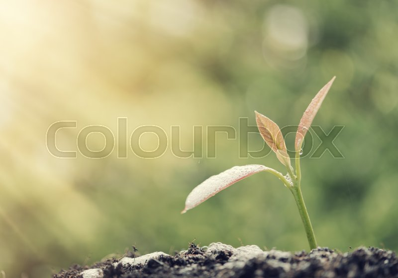 Success in business,watering young new born plant growing out of soil in sun light ,agriculture,retro effect, stock photo