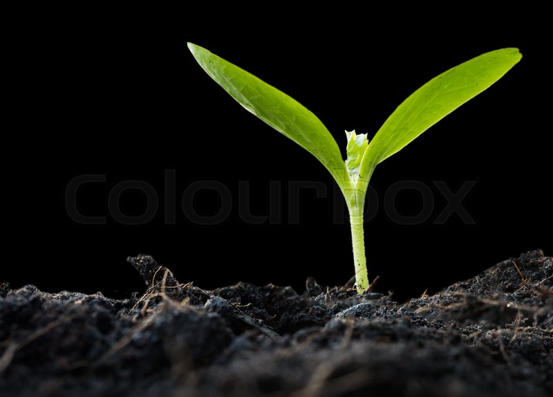 New Plant Growing Out Of Soil Isolated On Black Background