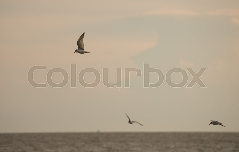 Birds fly by the sea in the evening, stock photo