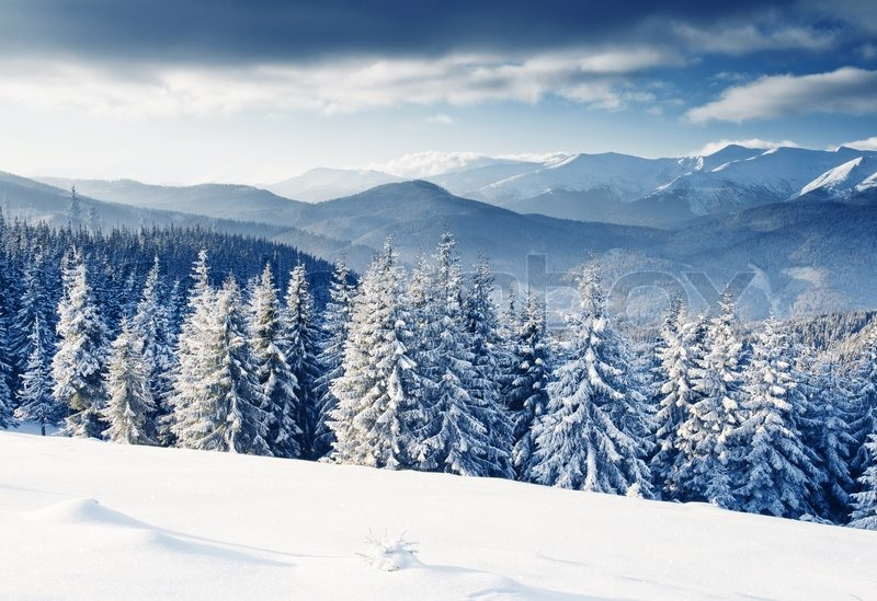 Beautiful winter landscape with snow covered trees stock Beautiful snowfall pictures