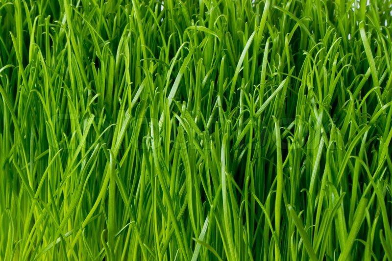 Close Up Of Fresh Spring Grass Stock Photo Colourbox