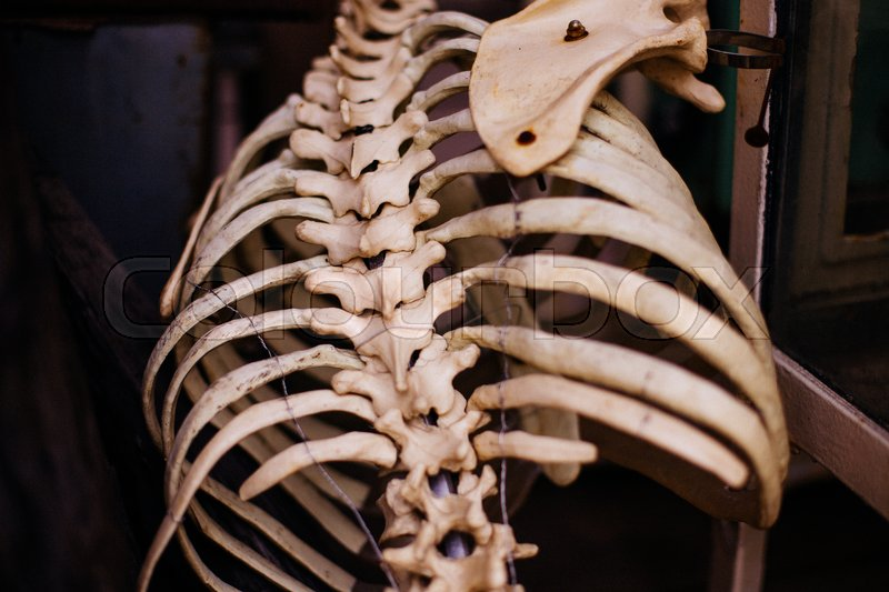 Old human rib skeleton. View from the back | Stock Photo | Colourbox