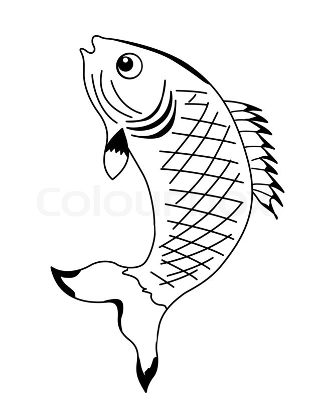 Silhouette fish on white background stock photo: colourbox.com/image/silhouette-fish-on-white-background-image-2891704