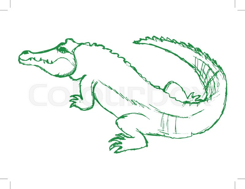Schön Krokodil Hirnanatomie Bilder - Anatomie Ideen - finotti.info