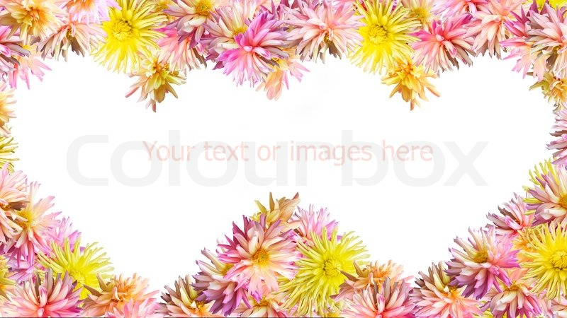 Pink-yellow Dahlia flowers set mould two heart shapes frame isolated ...