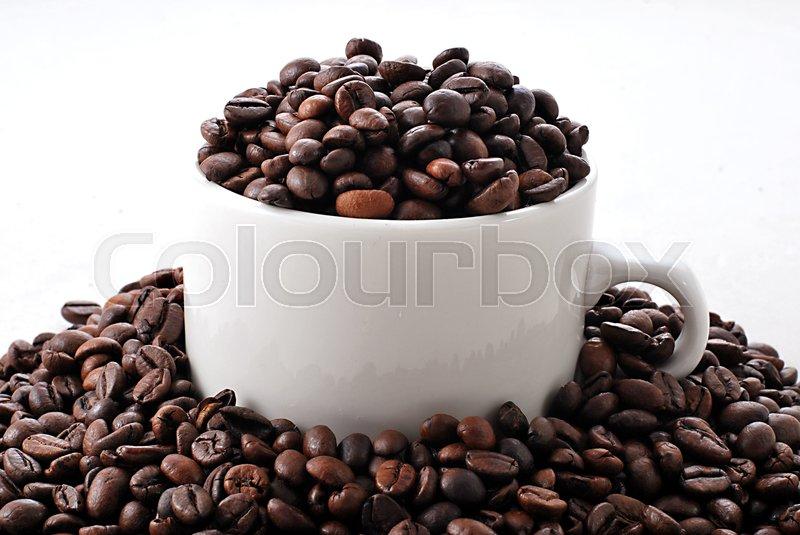 bean torrent