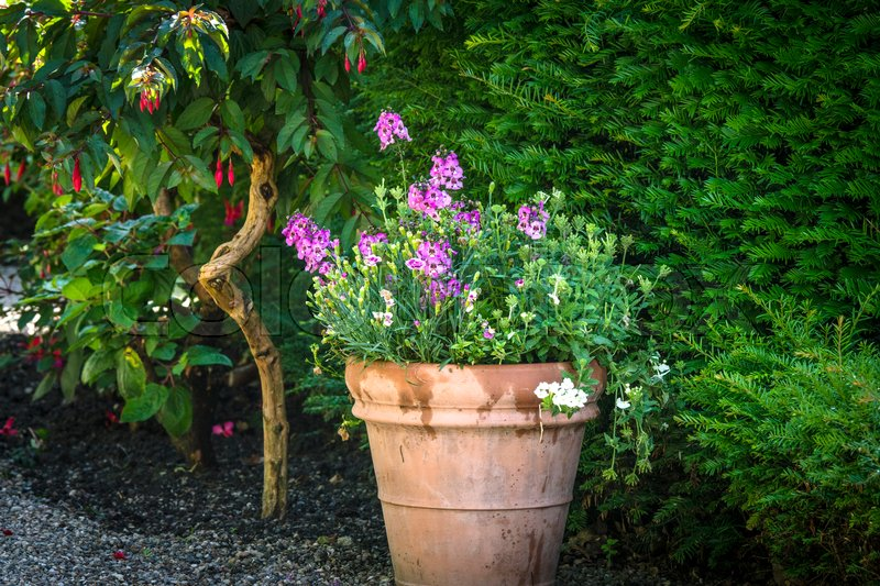 Flowers In A Pot With Violet Flowers In A Green Garden In The Summer |  Stock Photo | Colourbox