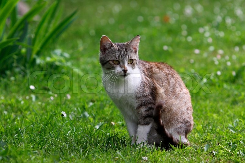 Quot Cat Sitting In Green Springs Grass Quot Stock Photo Colourbox