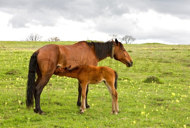 Do Baby Horses Drink Milk From Their Mom