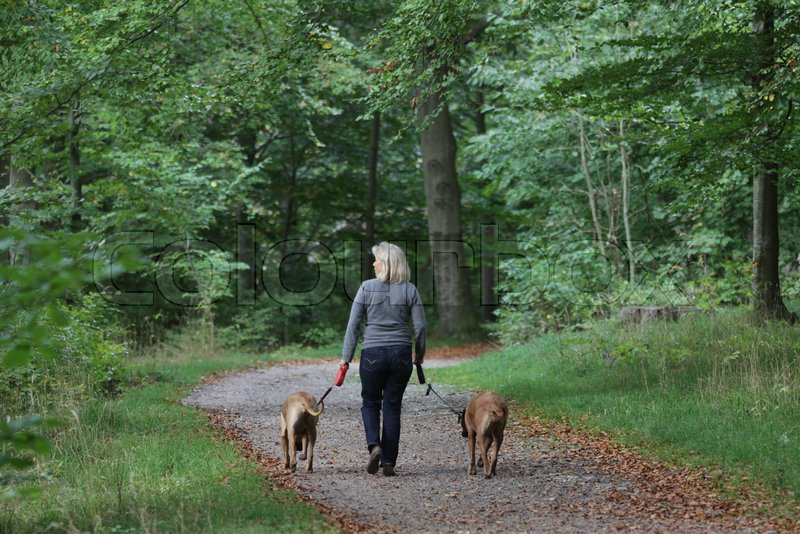 Walking the dog in Frederikslund forest in Holte, stock photo