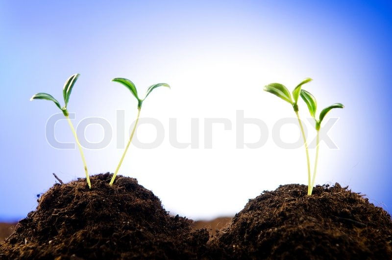 Green seedlings in new life concept, stock photo