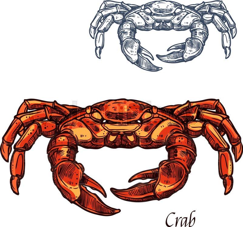 Crab Sea Animal Sketch Red Crab Or Shellfish Lobster Seafood