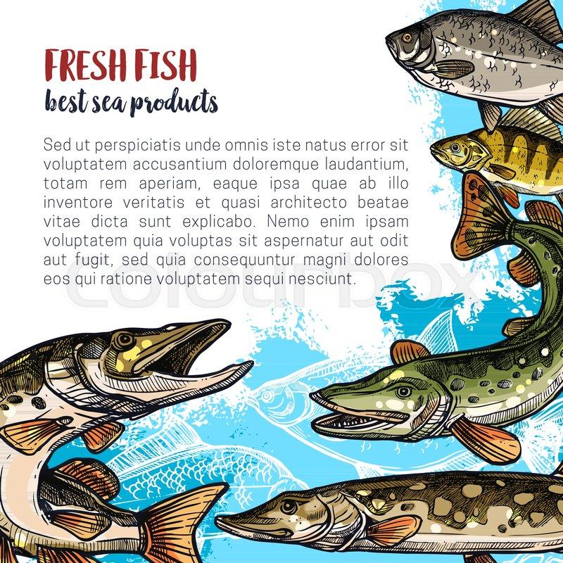 Sea And River Fish Animal Sketch Banner Of Ocean Perch Trout Pike Carp Crucian Bream For Fishing Sport Market Or Restaurant Menu Design