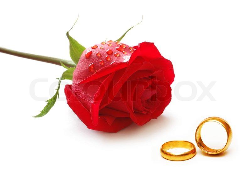 rose ringe