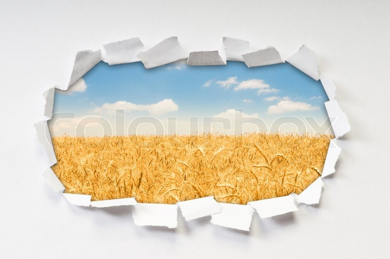 Wheat field through hole in paper, stock photo