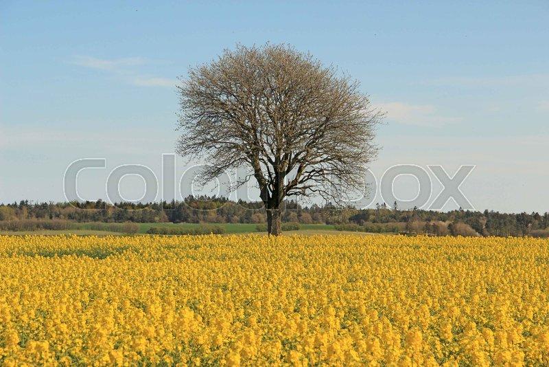 mark landbrug