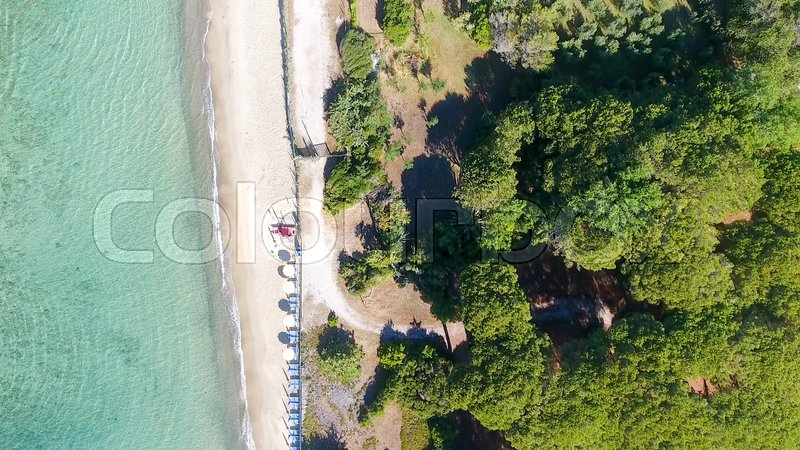 Overhead view of pinewood in front of the ocean, stock photo