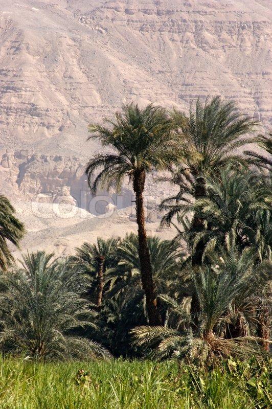 Sunny scenery near River Nile in Egypt
