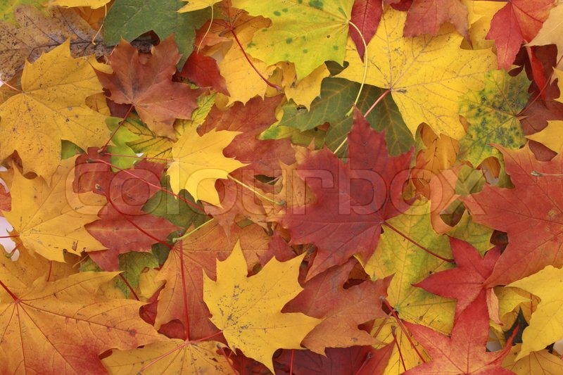 Color Autumn Leaves As Very Nice Natural Background